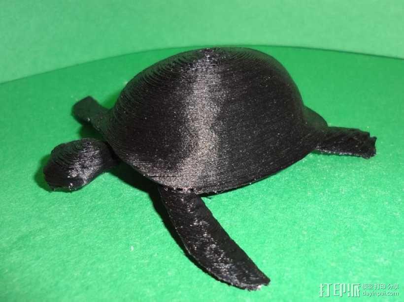 海龟  3D模型  图3