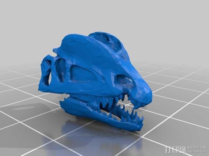 双脊龙头骨 3D模型  图1