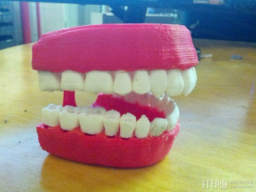 牙齿和牙龈 3D模型  图2