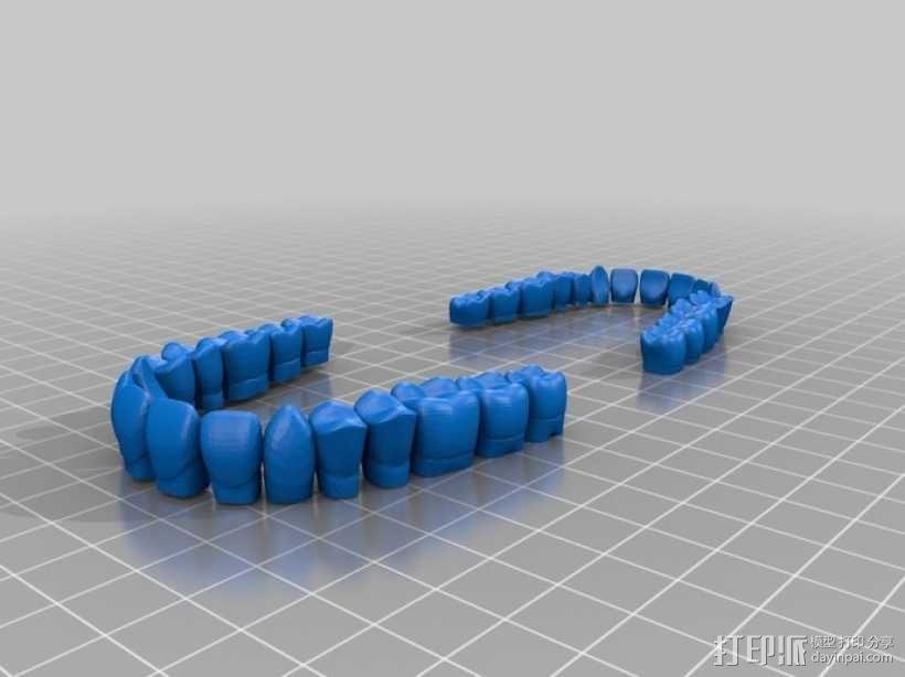 牙齿和牙龈 3D模型  图4
