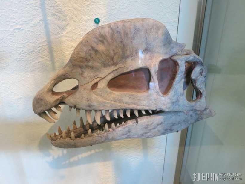 双脊龙头骨 3D模型  图2