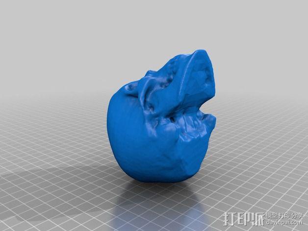 头骨模型 3D模型  图2