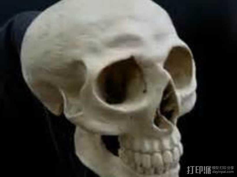 人头骨 3D模型  图1