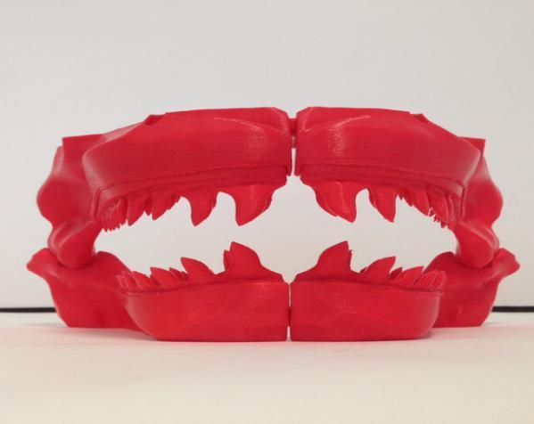 巴哈马锤头鲨头骨 3D模型  图4