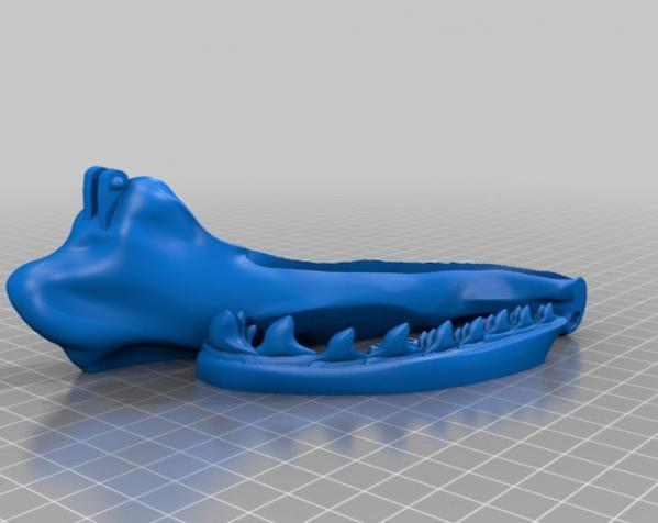巴哈马锤头鲨头骨 3D模型  图7