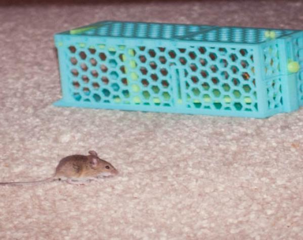 迷你捕鼠器模型 3D模型  图5