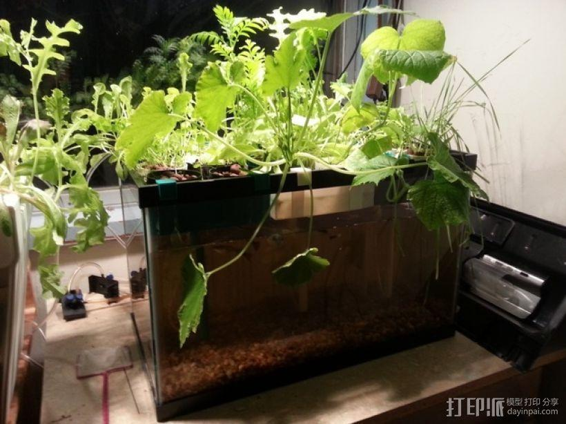 鱼菜共生系统 3D模型  图4