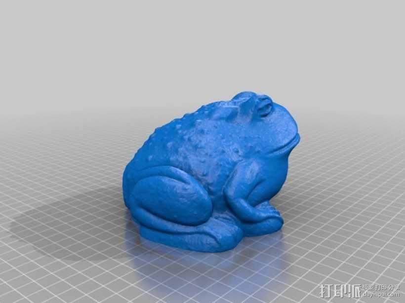 青蛙/蟾蜍 3D模型  图3