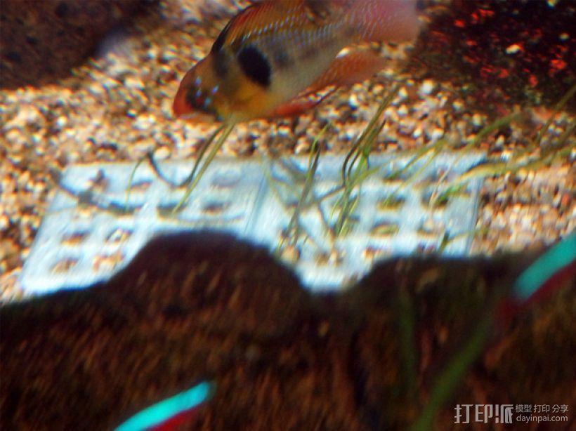 鱼缸植物生长网格 3D模型  图1