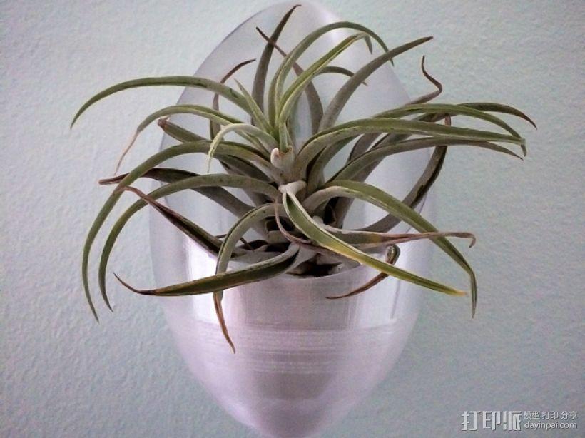 墙壁悬挂花瓶 3D模型  图1