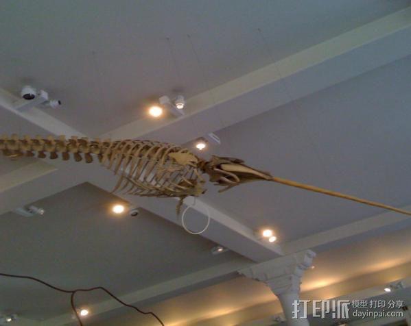 独角鲸鱼夹 3D模型  图3