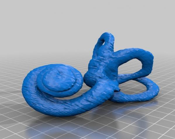 内耳 3D模型  图4