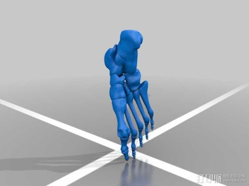 人体脚骨骨骼 3D模型  图1