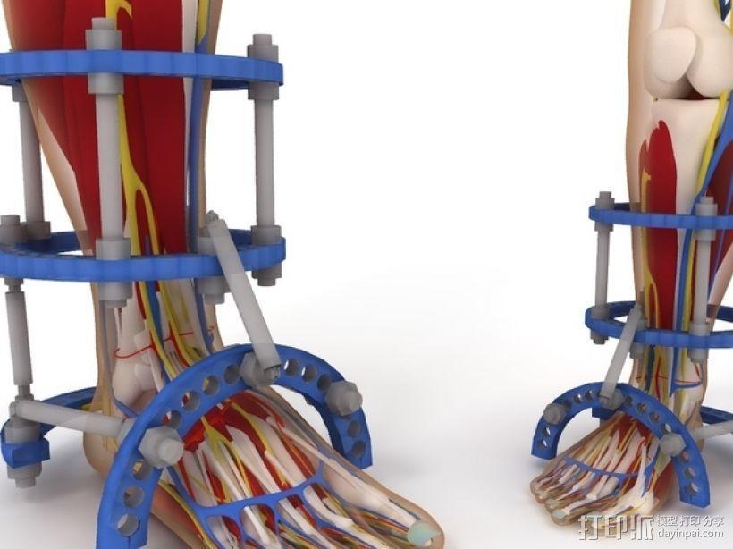 人体脚骨骨骼 3D模型  图2