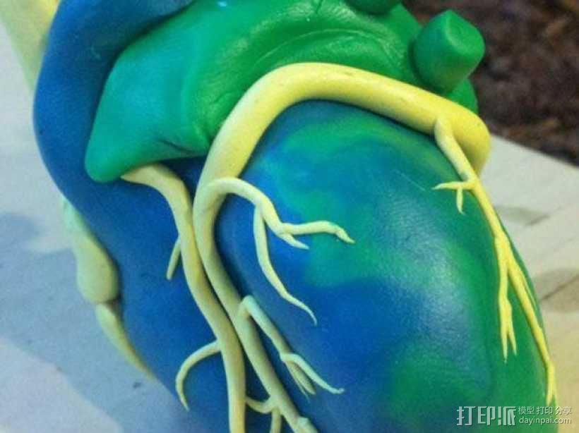 心脏 3D模型  图1