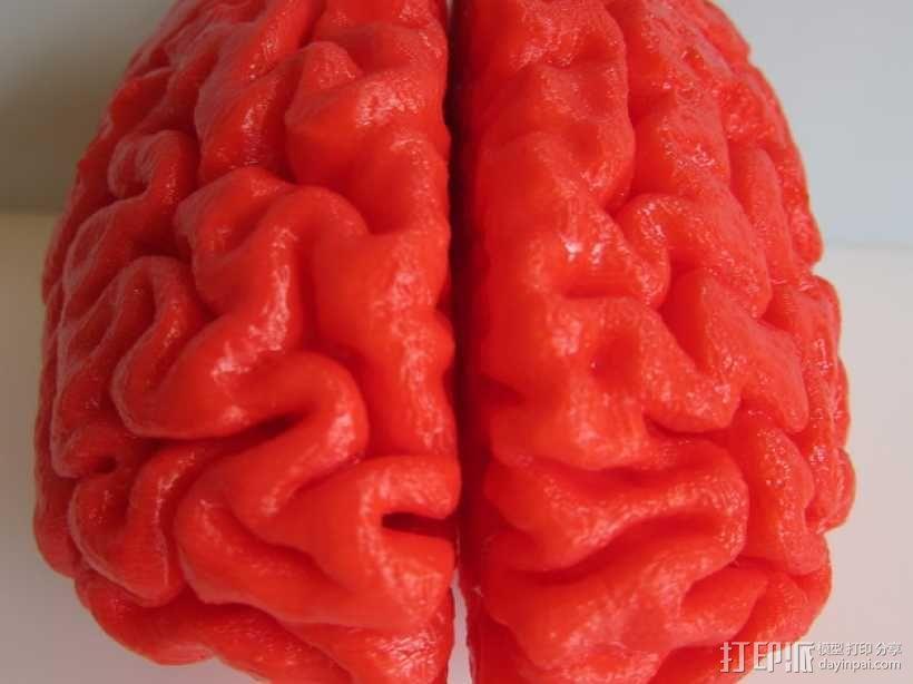 人脑 3D模型  图1