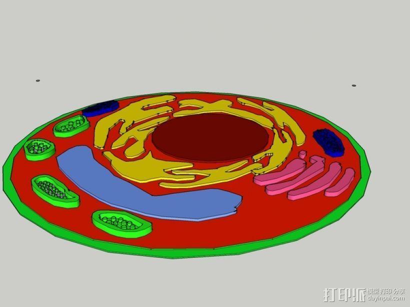 植物细胞 模型 3D模型  图12