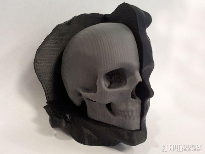头部模型和头骨 3D模型  图1