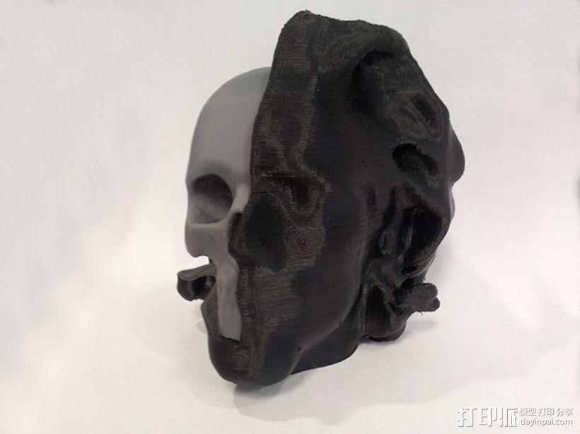 头部模型和头骨 3D模型  图2