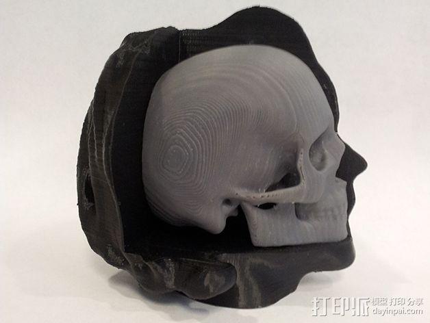 头部模型和头骨 3D模型  图3