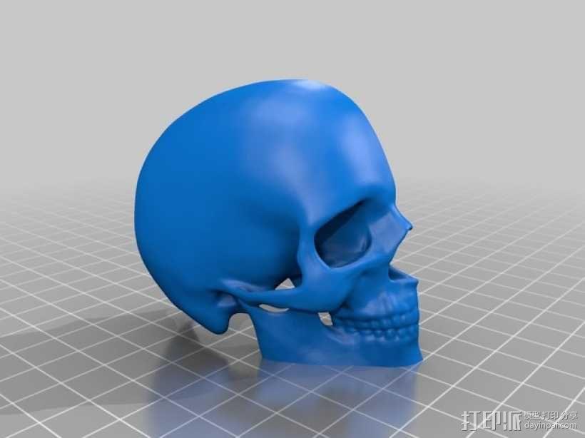 头部模型和头骨 3D模型  图6