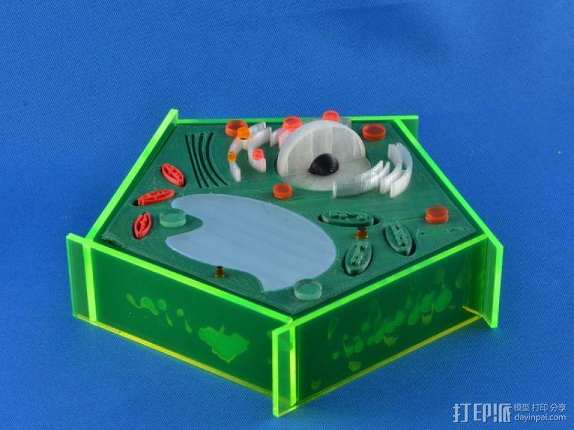 植物细胞 模型 3D模型  图1