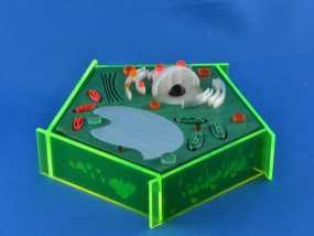 植物细胞 模型 3D模型