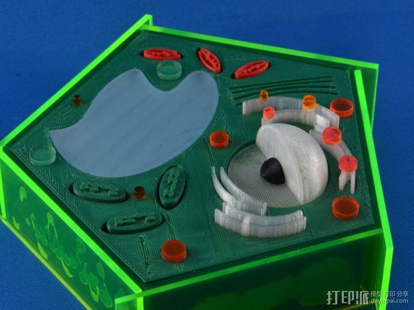 植物细胞 模型 3D模型  图2