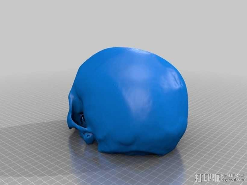 人头骨模型 3D模型  图1