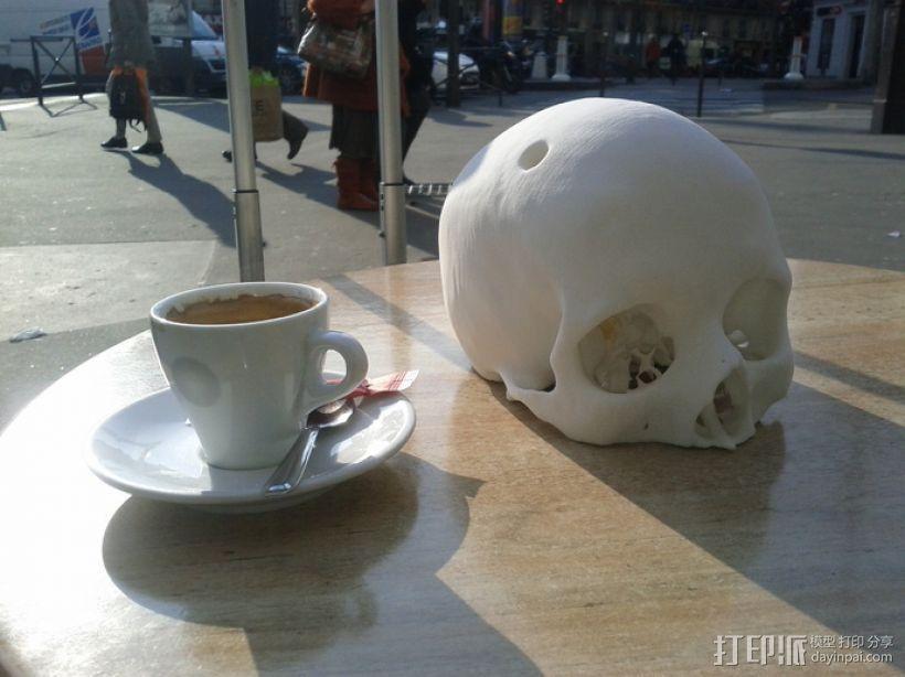 人头骨模型 3D模型  图3