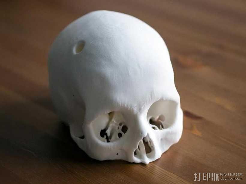 人头骨模型 3D模型  图2