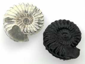 鹦鹉螺化石模型 3D模型