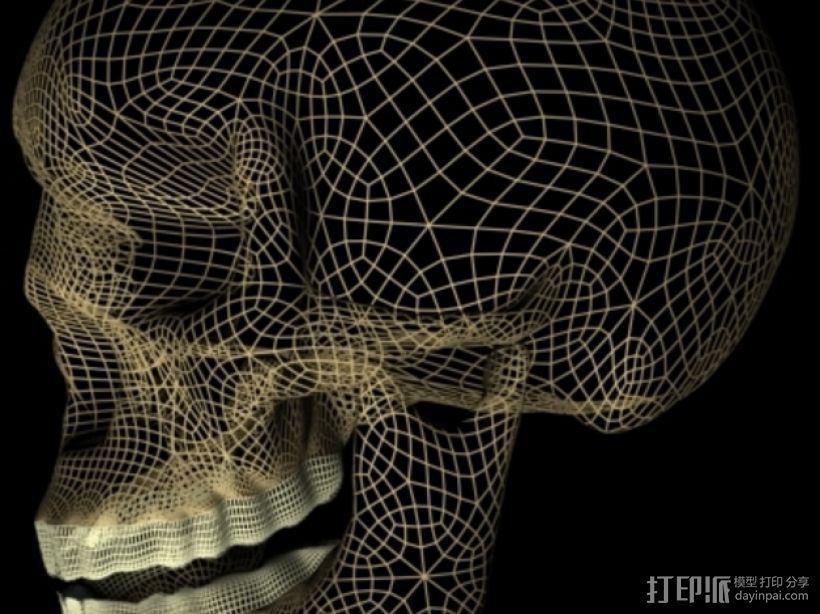 3D头骨模型 3D模型  图1