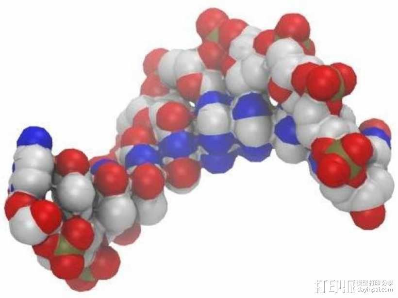 DNA分子模型 3D模型  图5