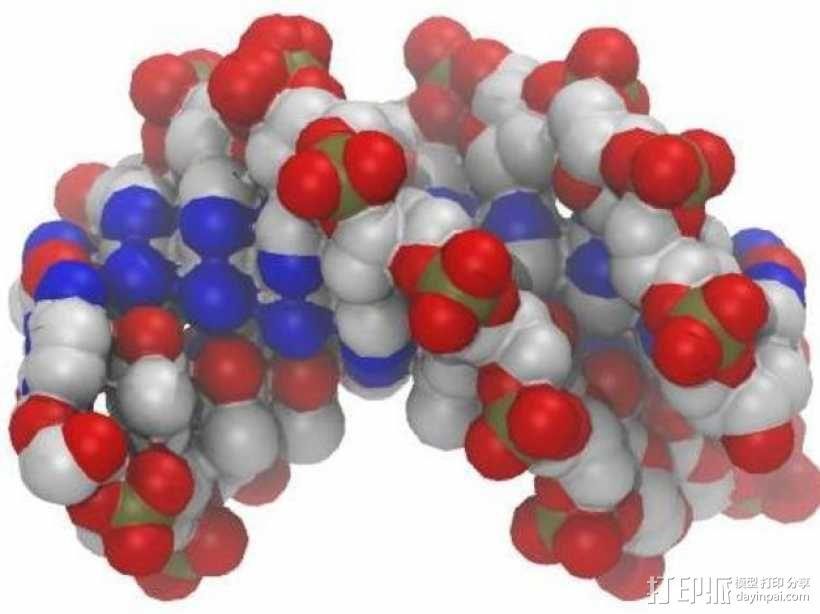 DNA分子模型 3D模型  图4