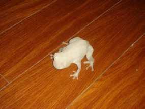 青蛙模型 3D模型