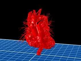 心脏模型 3D模型