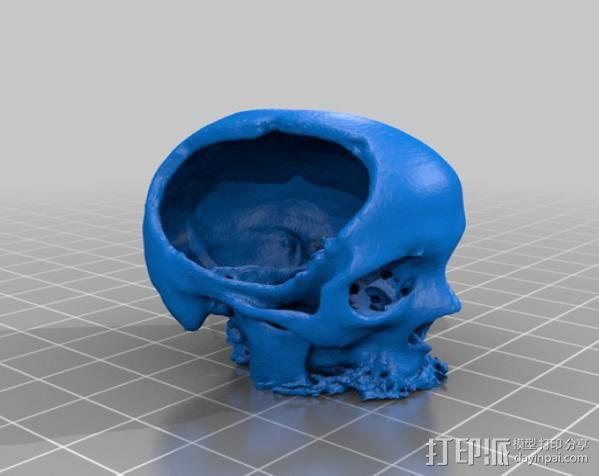 罗莎头骨模型 3D模型  图2