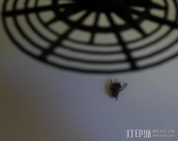 苍蝇拍 3D模型  图4