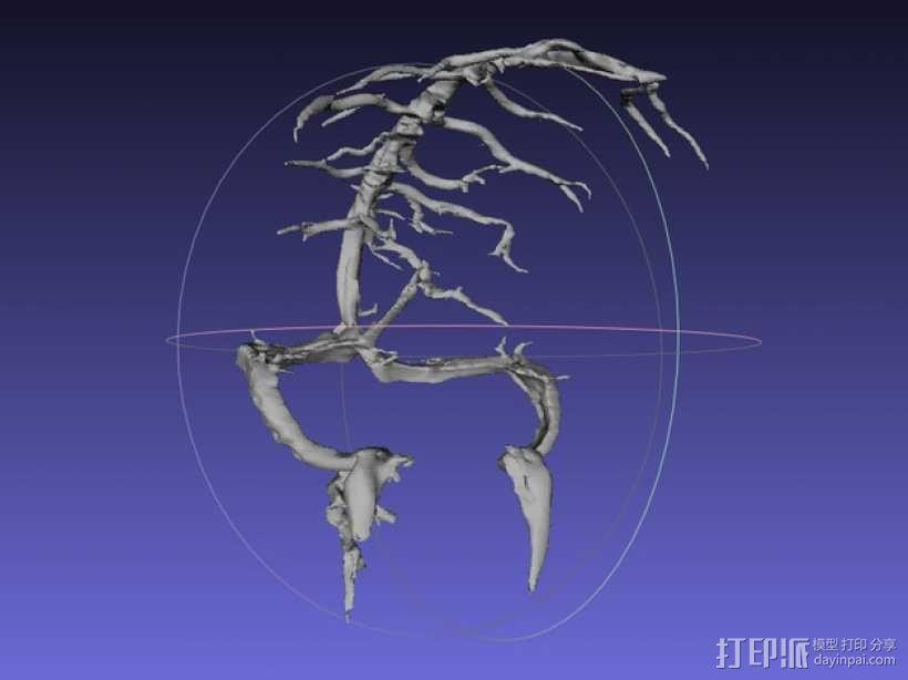 冠状窦模型 3D模型  图1