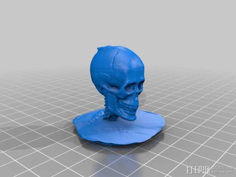 头骨模型 3D模型  图1