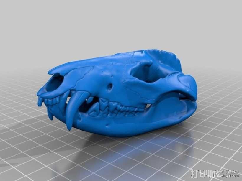 弗吉利亚负鼠头骨 3D模型  图2