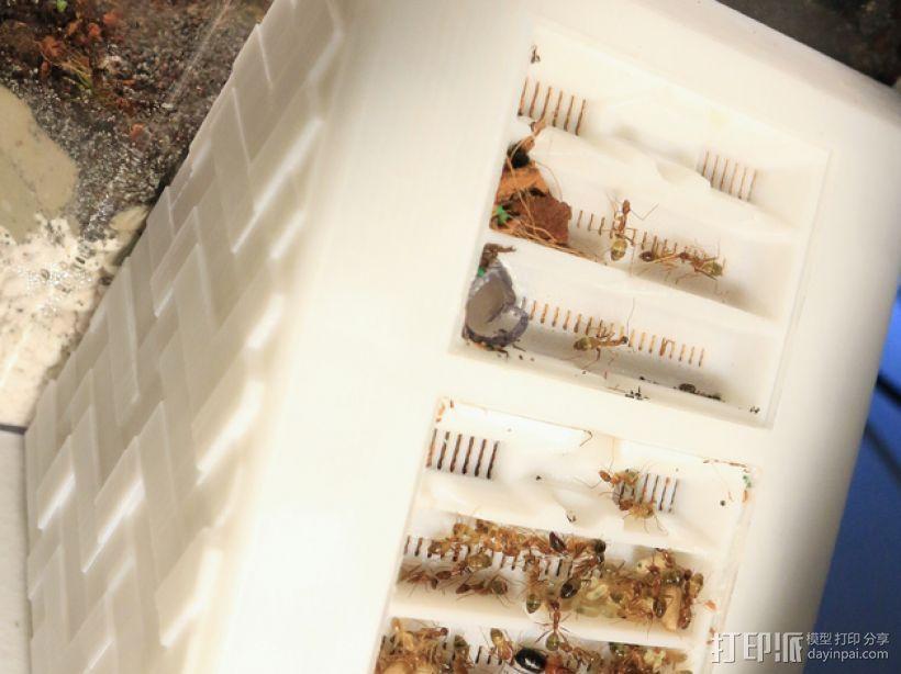 蚂蚁农场 模型 3D模型  图4