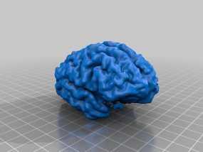 大脑皮层模型 3D模型