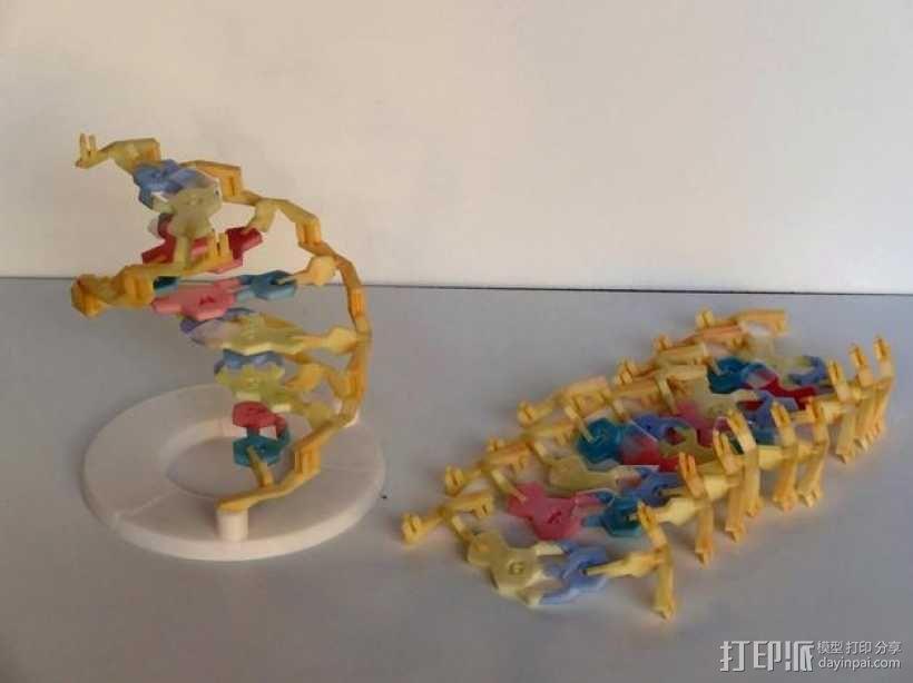 DNA 模型 3D模型  图1