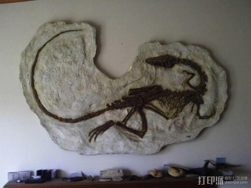 腔骨龙骨架化石模型 3D模型  图1