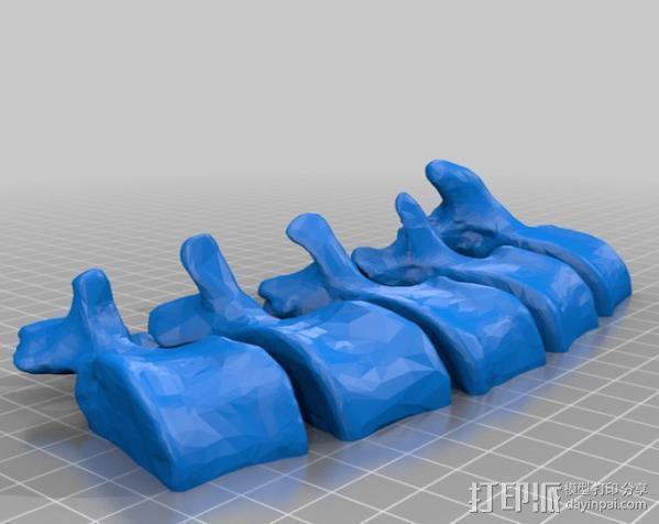 腰椎骨模型 3D模型  图2