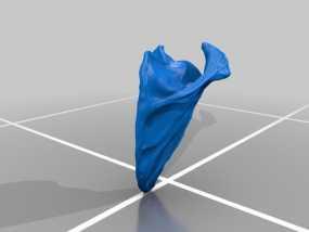 肩胛骨模型 3D模型