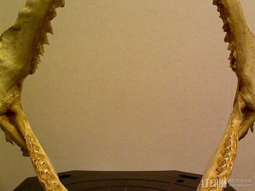 鲨鱼颌模型 3D模型  图2