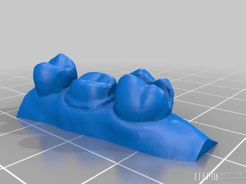 牙颌模型 3D模型  图3
